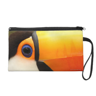 Toco Toucan (Ramphastos toco) is the largest Wristlet