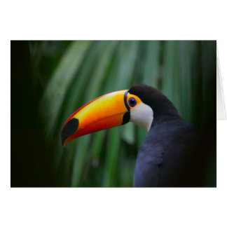 Toco Toucan (South America), Panama Card