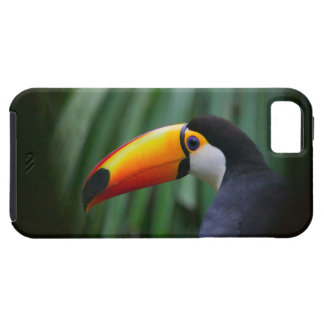 Toco Toucan (South America), Panama iPhone 5 Case