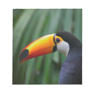 Toco Toucan (South America), Panama Notepad