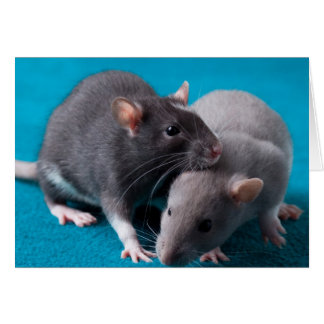 Together rats Card