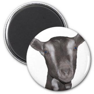 Toggenburg Goat Magnet