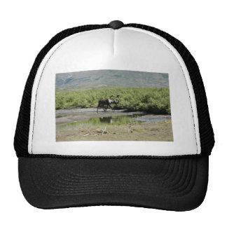 Togiak National Wildlife Refuge Mesh Hat