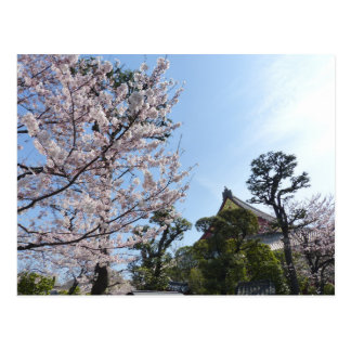 Tokyo Cherry Blossoms Sakura Postcard