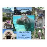 Toledo Zoo Postcard