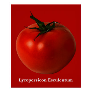 tomato art poster