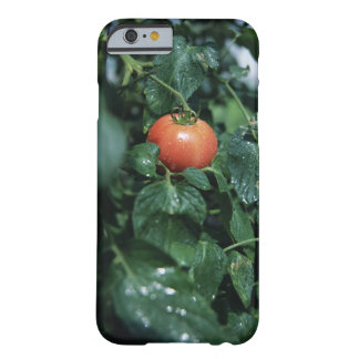 Tomato Barely There iPhone 6 Case
