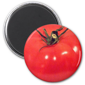 Tomato Beefsteak 4Marco Magnet