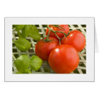 Tomato Cluster Card