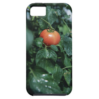 Tomato iPhone 5 Cover