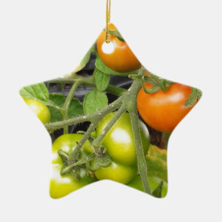 Tomato Plant Ceramic Star Decoration