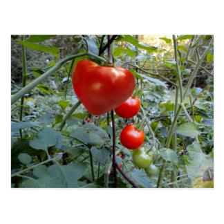 Tomato Summer in New Hampshire Postcard