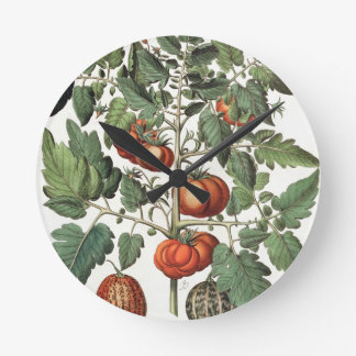 Tomatoes and Melons: 1.Poma amoris fructu luteo; 2 Wall Clocks