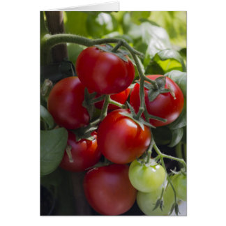 tomatoes in the garden card