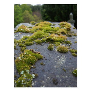 tombstone Scotland Postcard