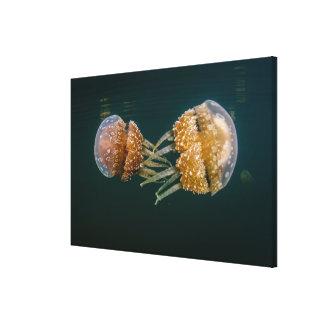 Tomolol Jellyfish Canvas Print