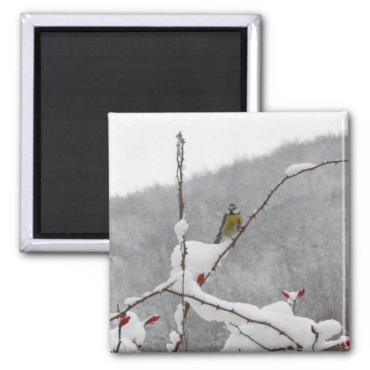 tomtit in winter magnet