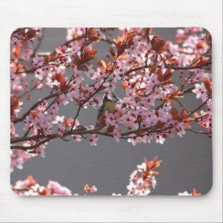 tomtit sitting in blooming cherry plum tree mouse pad