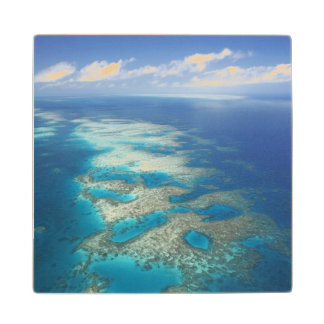 Tongue Reef, Great Barrier Reef Marine Park, Wood Coaster