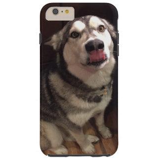 Tongue Teasing Alaskan Malamute Photograph Tough iPhone 6 Plus Case