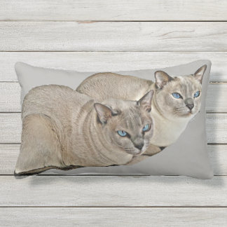 Tonkinese cats watching (outdoor pillow) outdoor cushion