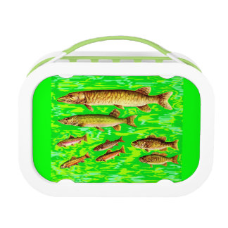 too many fish in the sea lunch box
