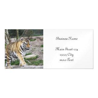 toony tiger magnetic invitations