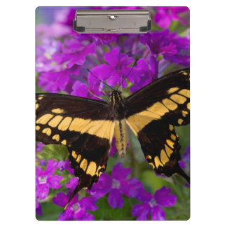 Top of a swallowtail butterfly clipboard