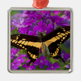 Top of a swallowtail butterfly Silver-Colored square decoration