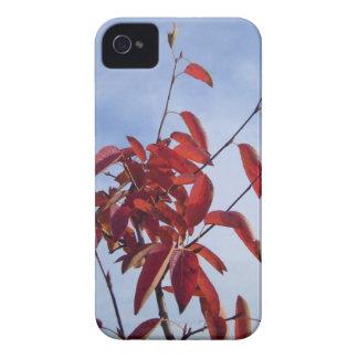 TOP OF AUTUMN TREE Case-Mate iPhone 4 CASES
