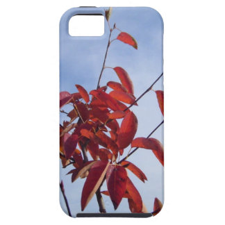 TOP OF AUTUMN TREE iPhone 5 CASE