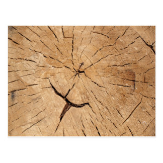 Top view closeup on an old tree stump postcard