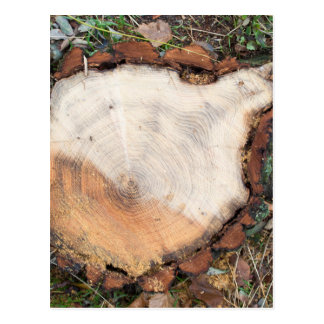 Top view of a fresh cut tree stump on the forest postcard