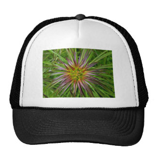 Top View of a Lilium Regale Lily Flower Trucker Hat
