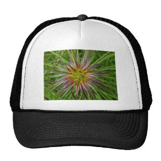 Top View of a Lilium Regale Lily Flower Cap