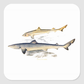 TOPER AND YOUNG SHARKS SQUARE STICKER