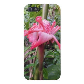 Torch Ginger Cover For iPhone 5/5S