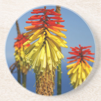 Torch lilies beverage coasters