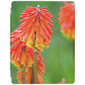 Torch Lily (Kniphofia Uvaria), Western Cape iPad Cover