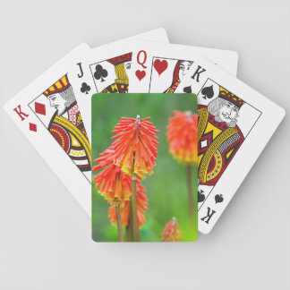 Torch Lily (Kniphofia Uvaria), Western Cape Playing Cards