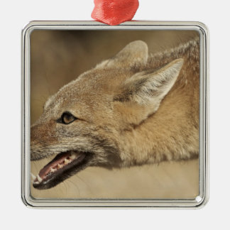 Torres del Paine, Chile. Patagonian Gray Fox, Christmas Ornament