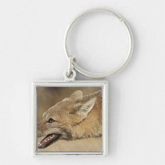 Torres del Paine, Chile. Patagonian Gray Fox, Silver-Colored Square Key Ring