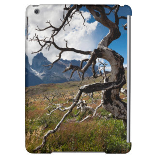 Torres del Paine National Park, fire damaged trees