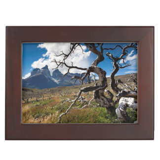Torres del Paine National Park, fire damaged trees Keepsake Box
