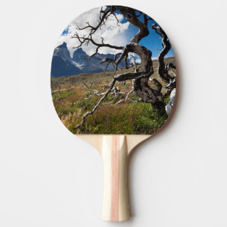 Torres del Paine National Park, fire damaged trees Ping Pong Paddle