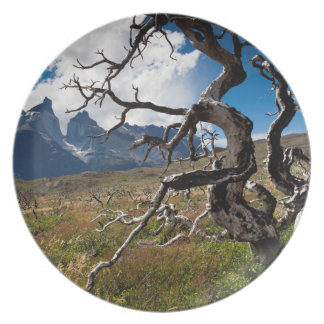 Torres del Paine National Park, fire damaged trees Plate