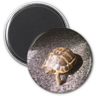Tortoise 6 Cm Round Magnet