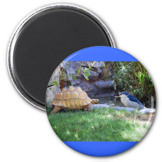 Tortoise and Blue Jay Friends 6 Cm Round Magnet