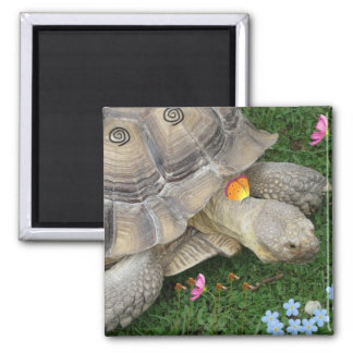 tortoise and flowers refrigerator magnets