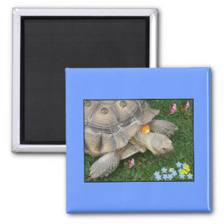 tortoise and flowers fridge magnets